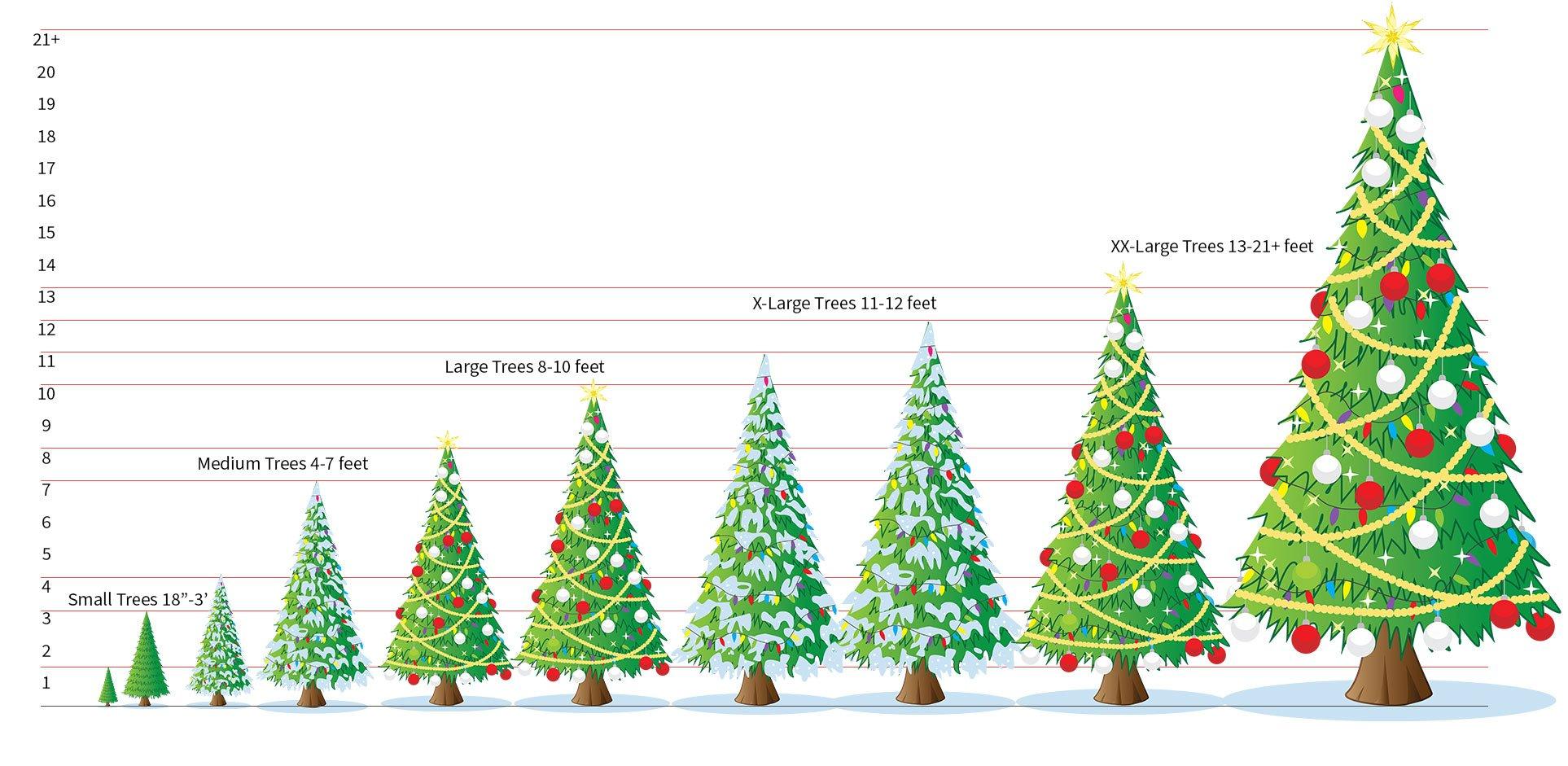 MJW Christmas Tree Sizes